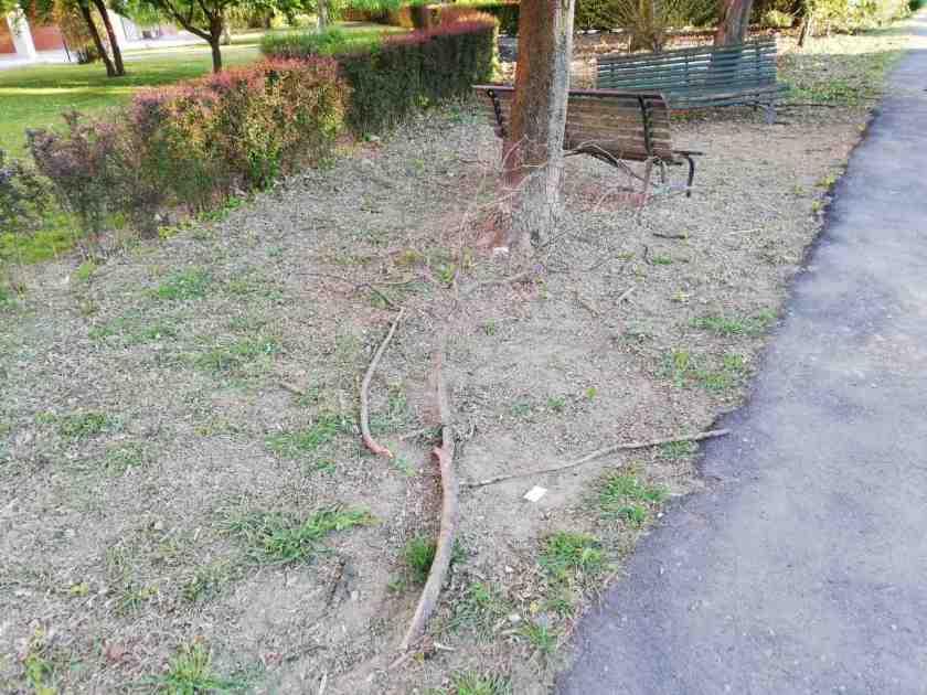Giardini malgestiti