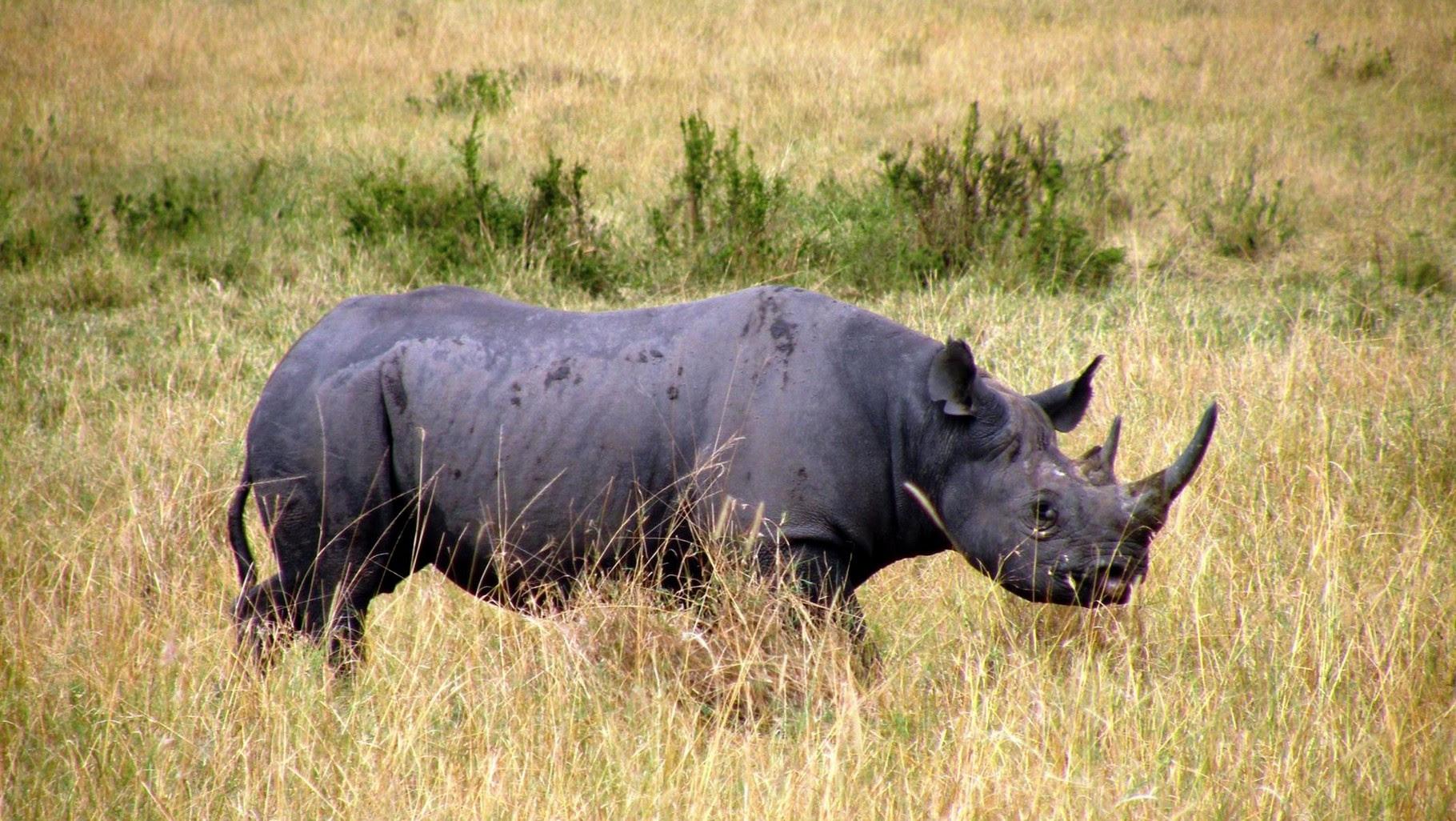 I rinoceronti