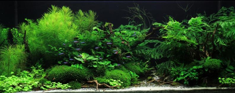 piante parlano19