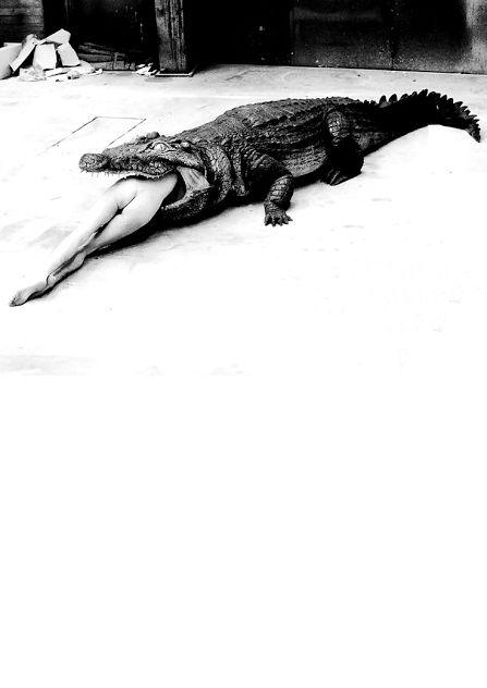 donna coccodrillo