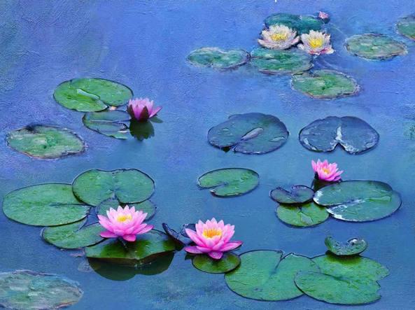 Le ninfee di Claude Monet, di MauraMantellino