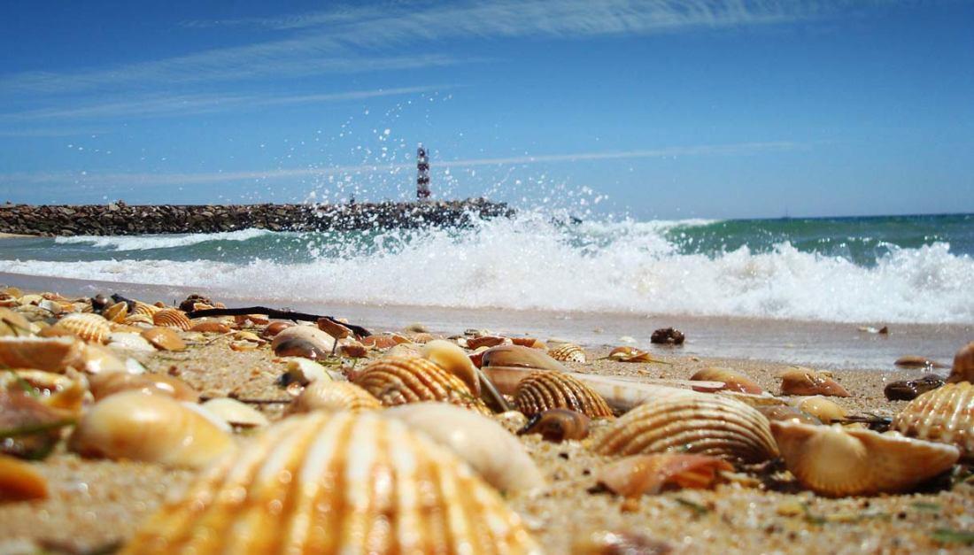 albufeira-spiaggia-conchiglie-w