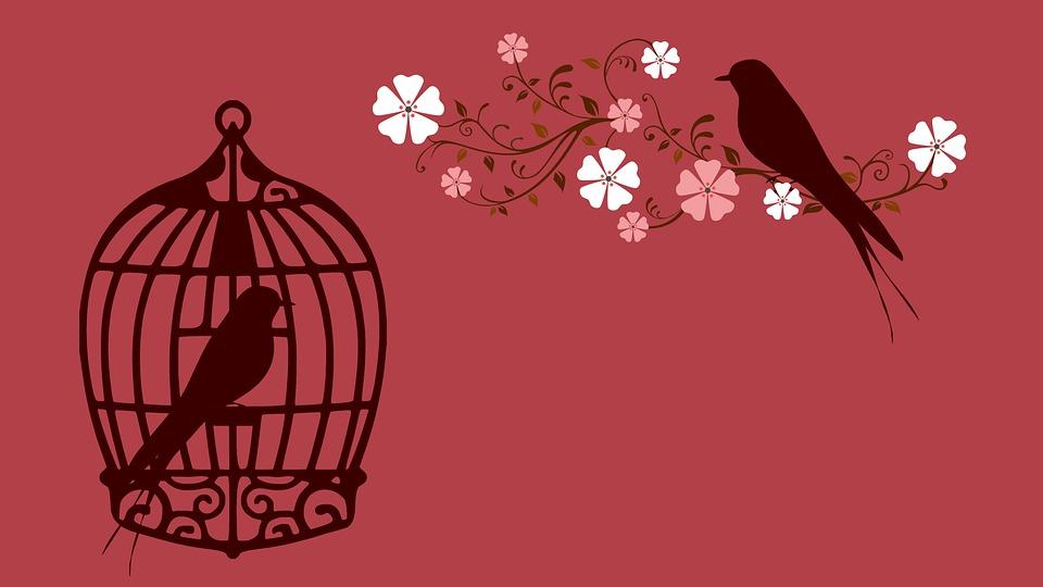 bird-855222_960_720