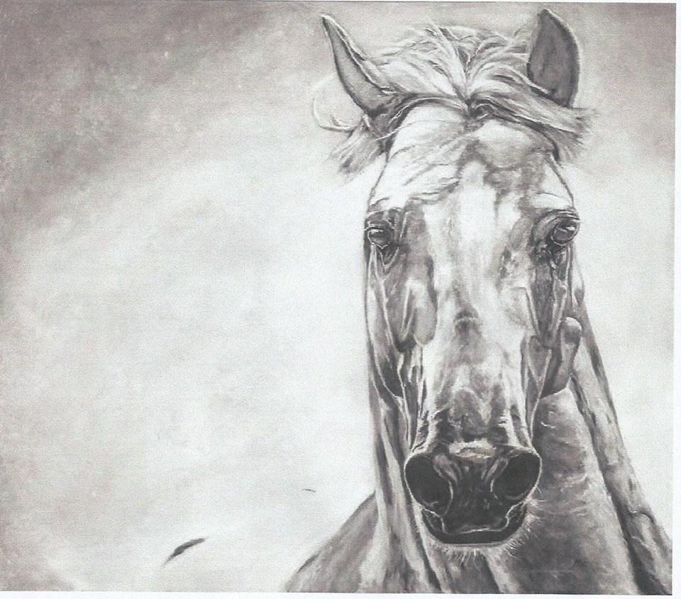 """Il cavallo della """"botticella"""" di Ferdinando Caputi (Roma1982)"""