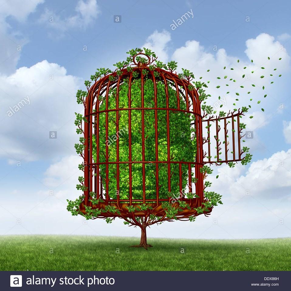 la gabbia.jpg