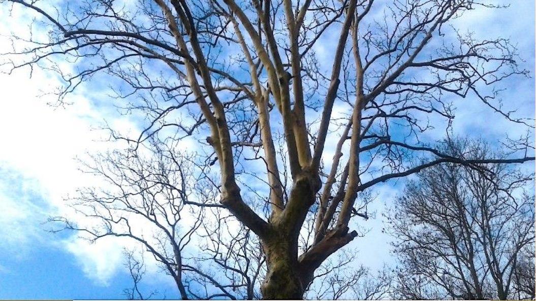 L'albero nudo.jpg