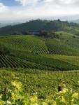 vigneti-monferrato-e1562682447577.jpg
