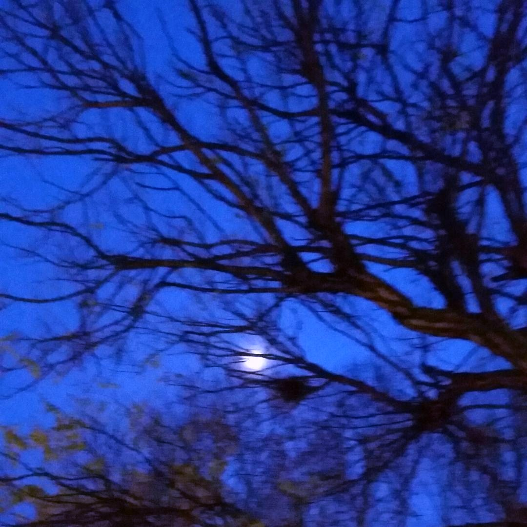 blu luna