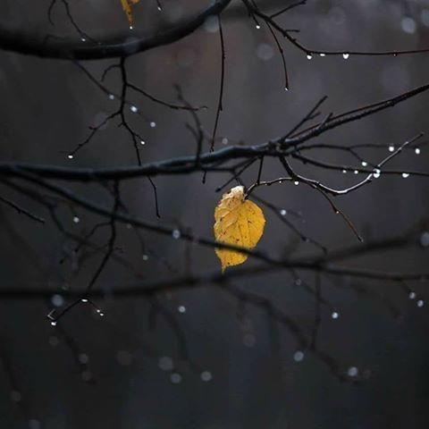 autunno di notte