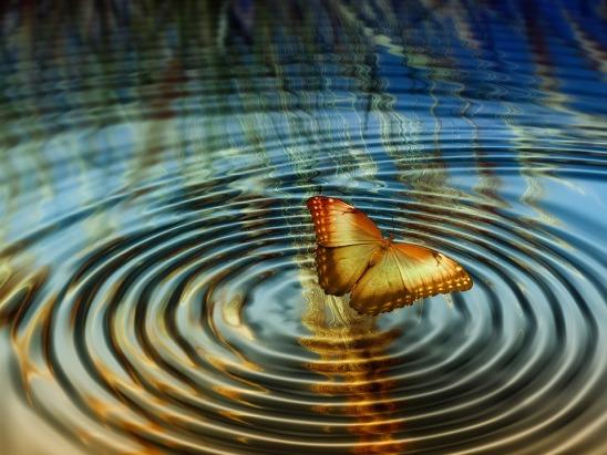 farfalla acqua
