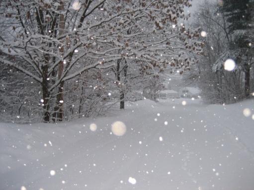 rami nella neve