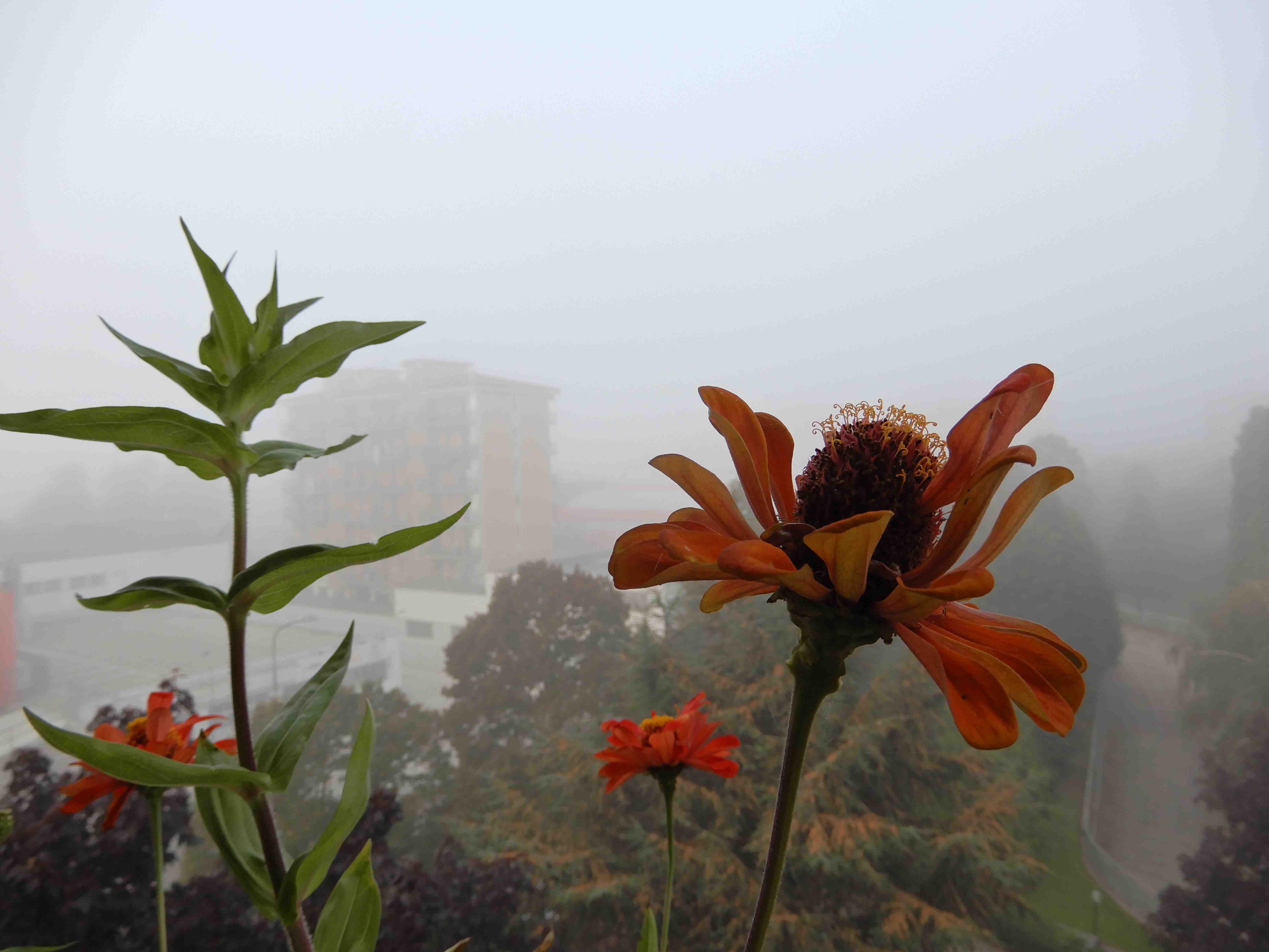 Fiori nella nebbia 1