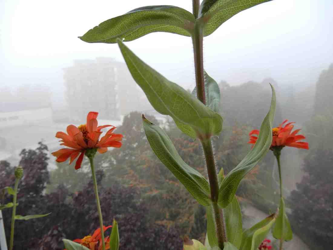 Fiori nella nebbia 2