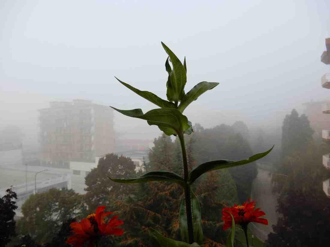 Fiori nella nebbia 3