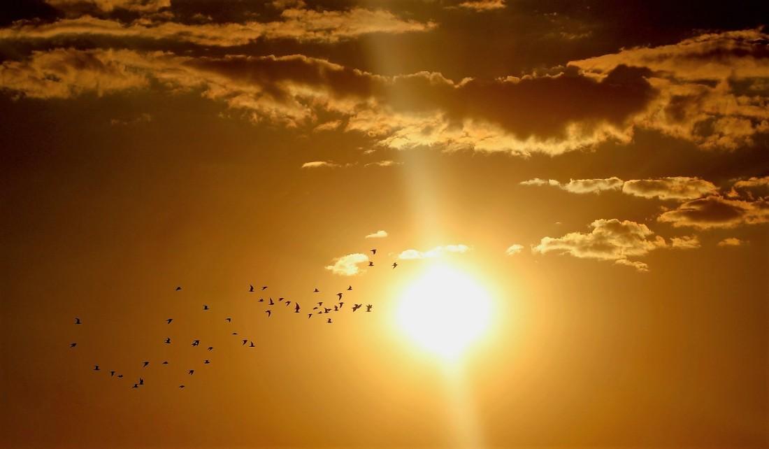 https://alessandriatoday.files.wordpress.com/2019/10/sunset-1625073_1920.jpg