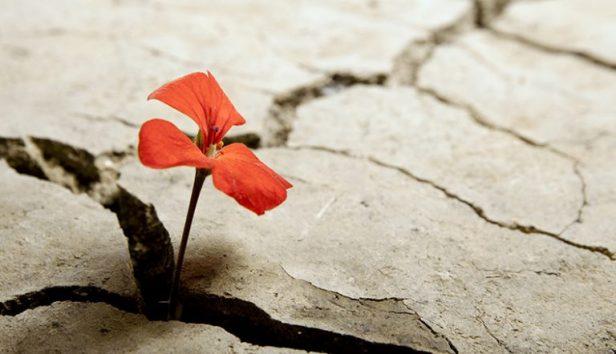 resilienza-mindfulness-768x442