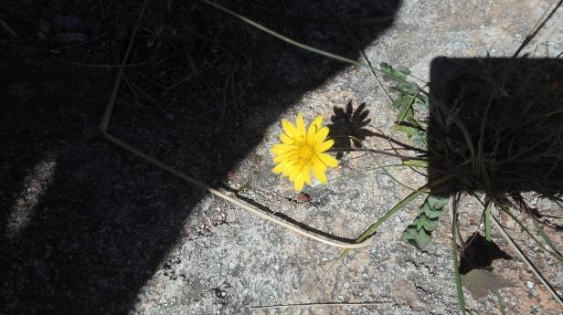 Il buio e il cemento insidiano la bellezza di un fiore, che malgrado tutto è sbocciato.