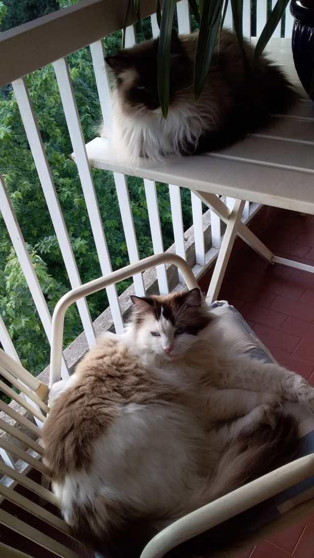 Wollie e Margot sul balcone