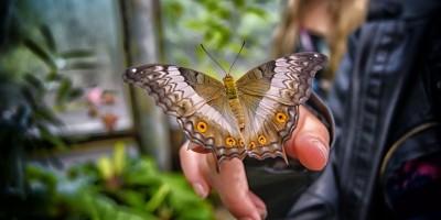 https://alessandriatoday.files.wordpress.com/2020/07/butterfly-2371754_1920.jpg